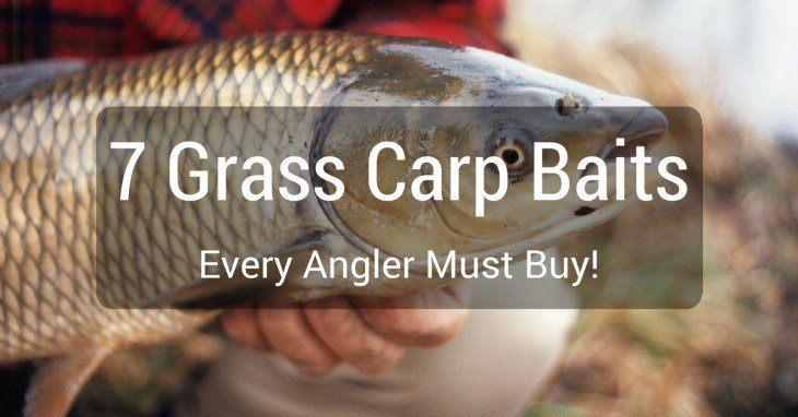 7 Grass Carp Baits Every Angler Must Buy!