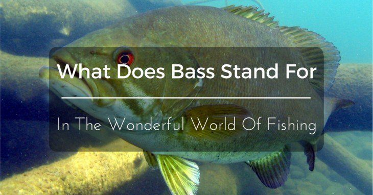 What Does Bass Stand For
