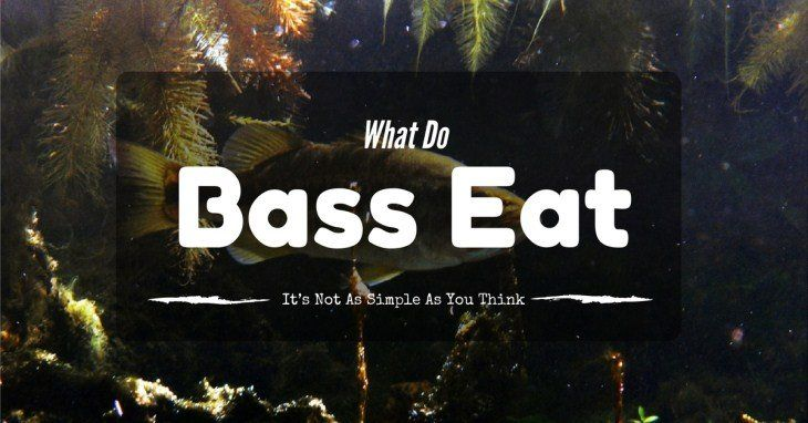 What Do Bass Eat? It's Not As Simple As You Think