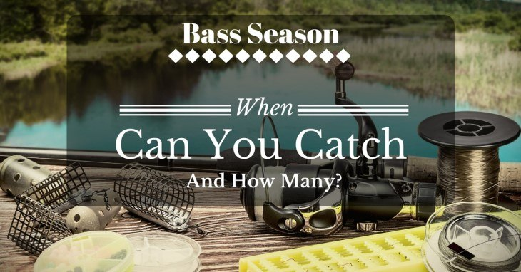 When Is Bass Season And How Much Can You Catch