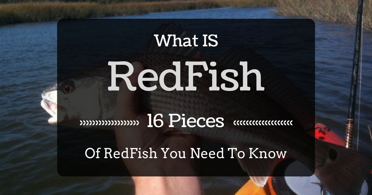 What Is Redfish