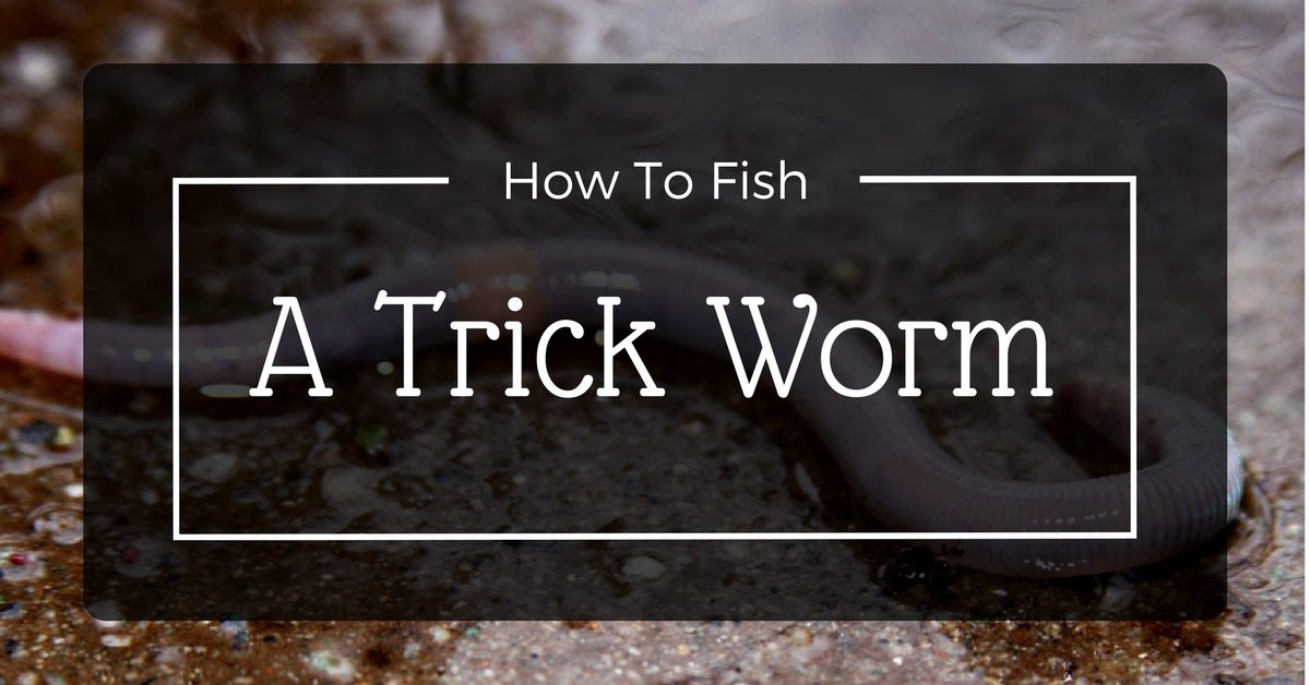 How To Fish A Trick Worm