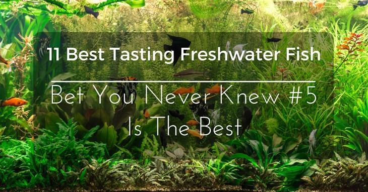 Best Tasting Freshwater Fish