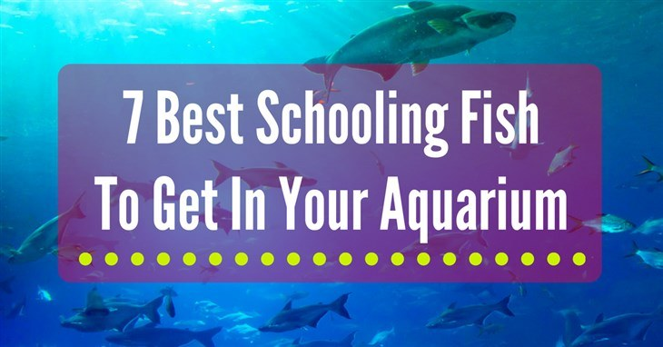 Best Schooling Fish Reviews