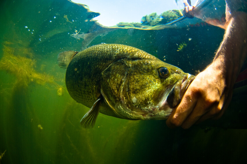 bass fishing guide